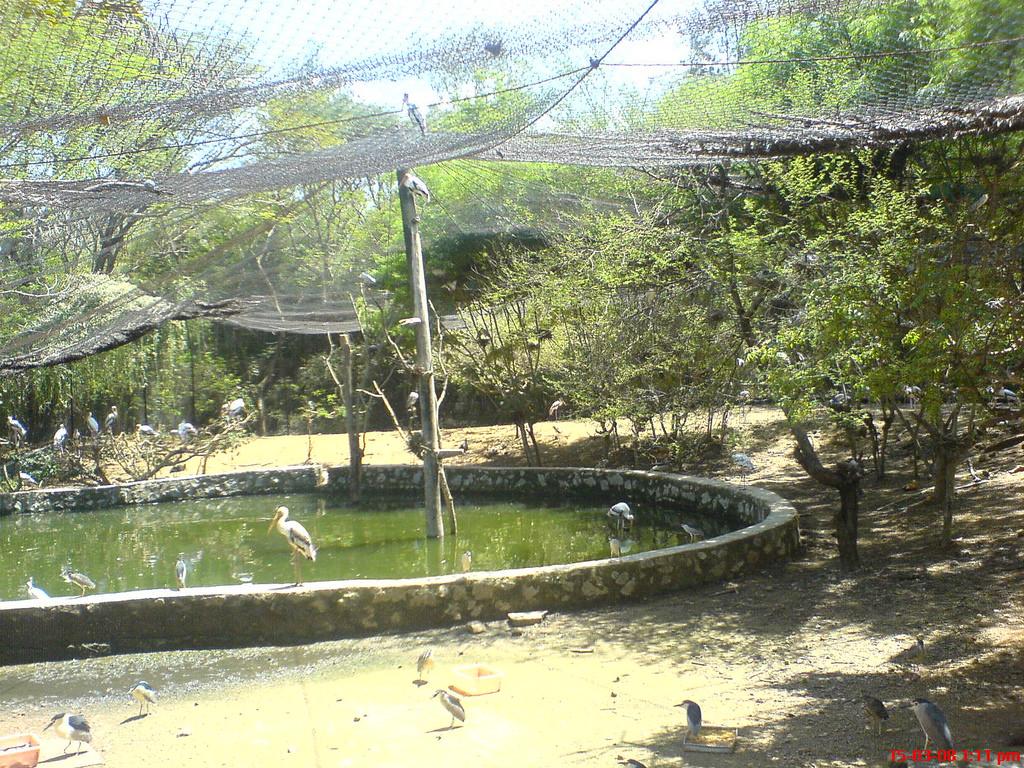 Arignar Anna Zoological Park