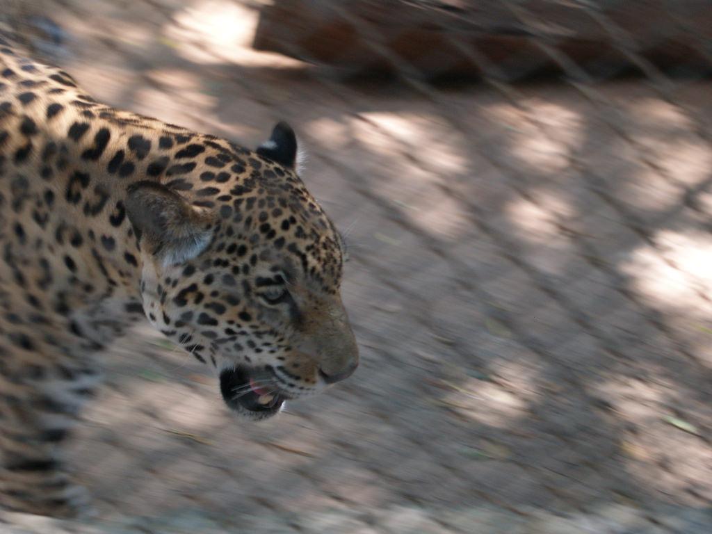 Mysore zoo