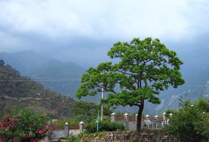 Image Source www.koofri.com