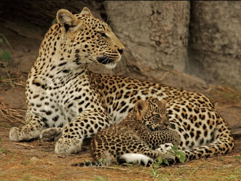 Borail Wildlife Sanctuary