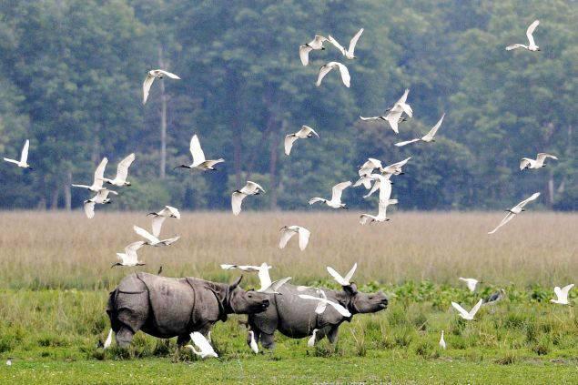 Rajiv Gandhi Orang National Park