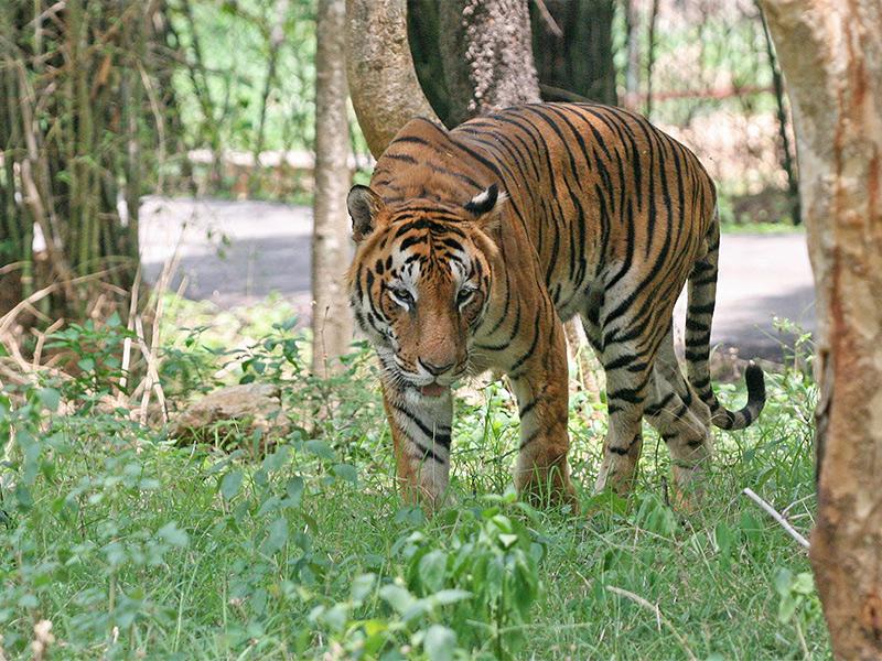 Sonai Rupai Wildlife Sanctuary